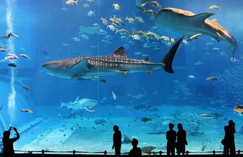 พิพิธภัณฑ์ใต้น้ำ