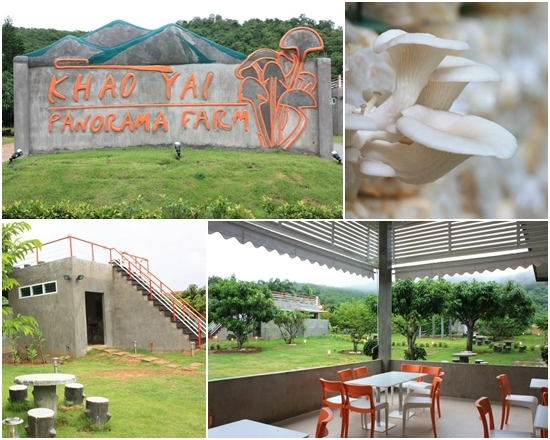 Khaoyai Panorama Farm